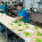 Food Preparation Worker Safety Training