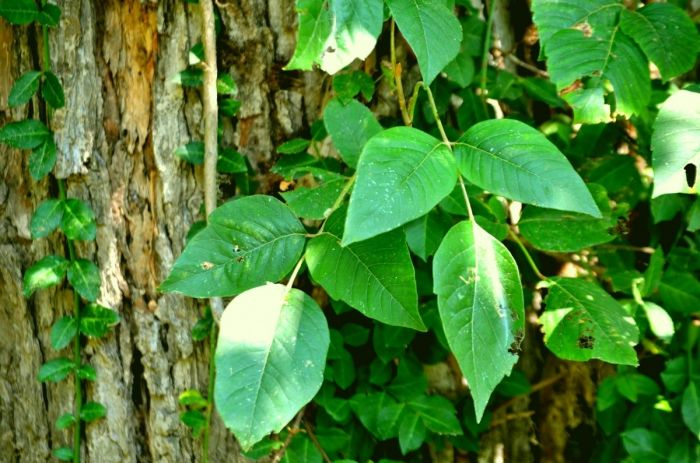 Poisonous Plant Safety Training Video
